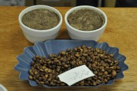 Cupping at the Clifton Coffee Company: Guatemala Finca la Bolsa filter