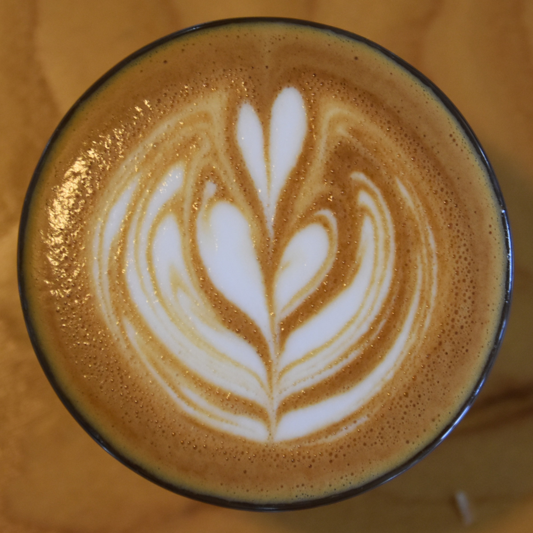 The latte art in my cortado, made with the Third Coast blend at Madcap, Monroe Center, Grand Rapids.