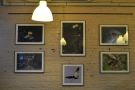 The walls were adorned with wildlife photographs while I was there...