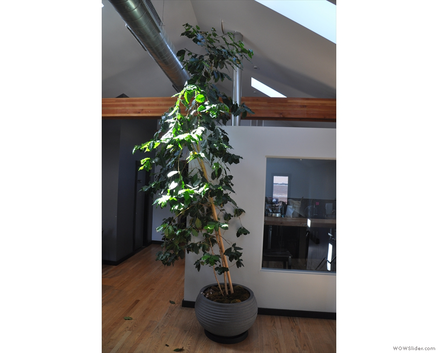 Other nice touches up here include this plant, which greets you at the top of the stairs.