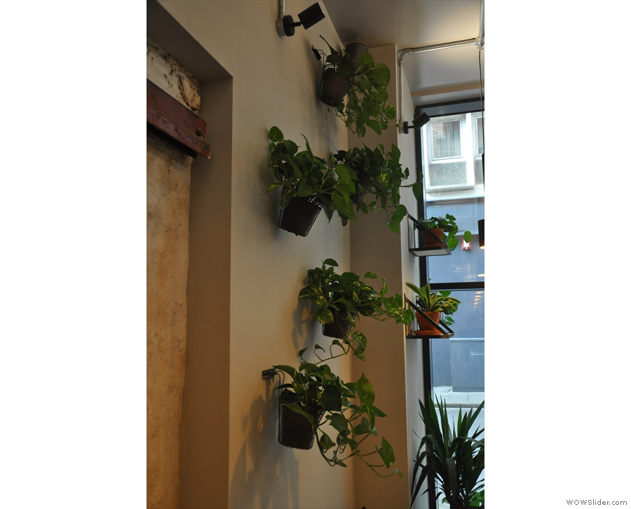 ... where the walls are lined with plants...