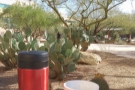 In Phoenix, I took my coffee out into the desert (well, the office courtyard).