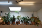 ... with just a bunch of plants and a skylight for company!