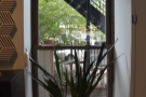 There's also this plant in the window...