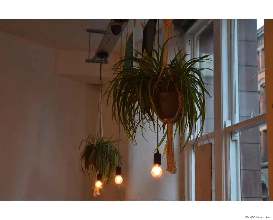 As well as plants, there are plenty of light bulbs...