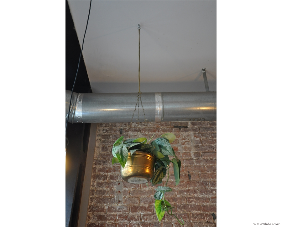 In fact, Bluebird is full of great little touches, such as this plant hanging from the ceiling.