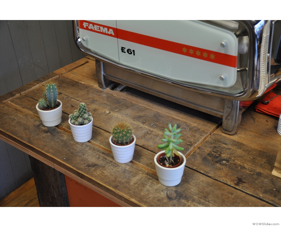 More cacti, this time guarding the espresso machine.