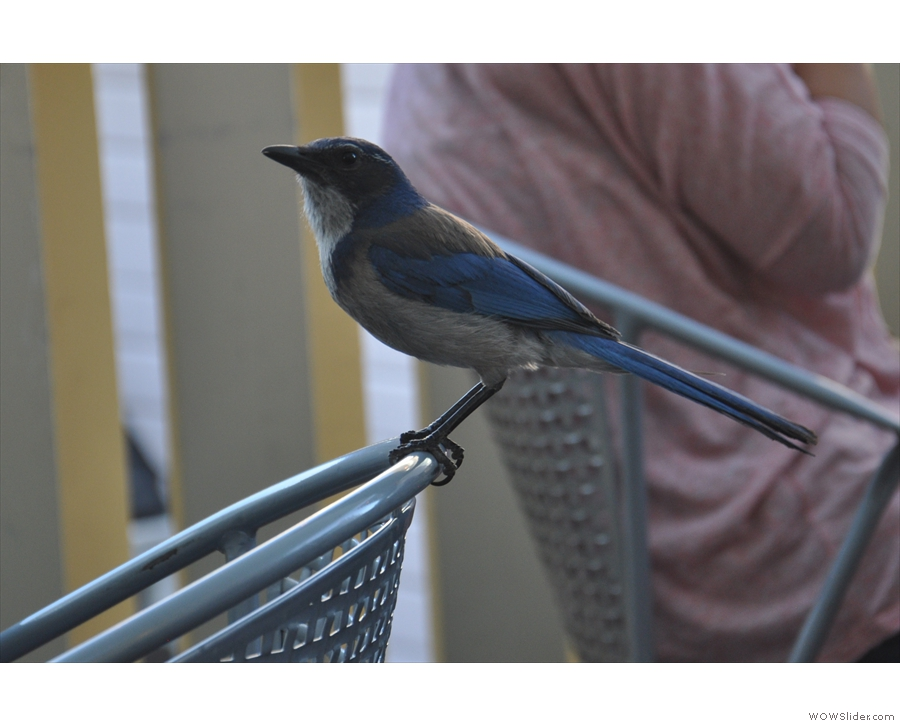 It's a bluebird, who was very good at posing for pictures.