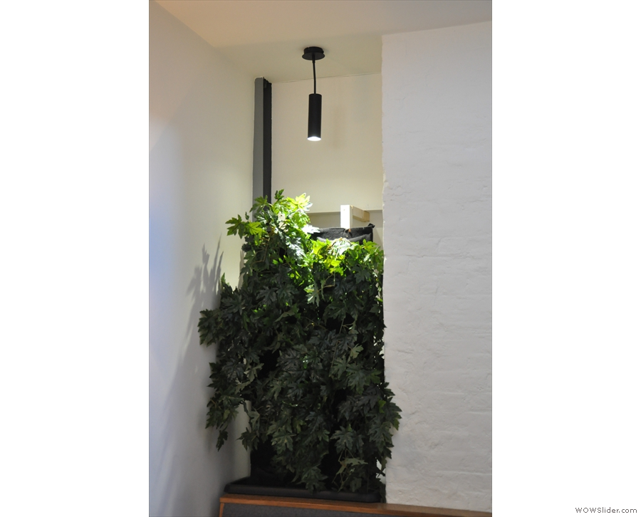 This plant sits in a niche at the back...