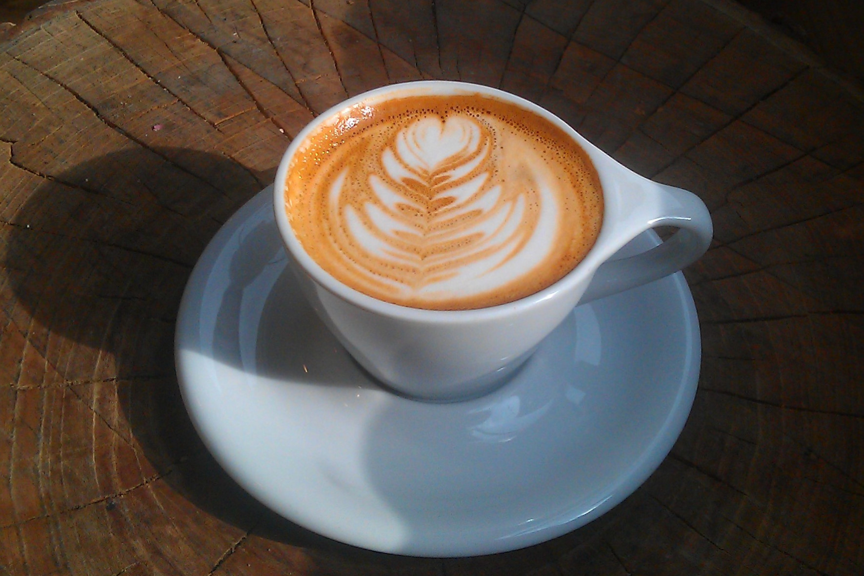 A cappuccino in a classic white cup, sitting on a tree-stump table in the window, half in shadow from the sunlight.