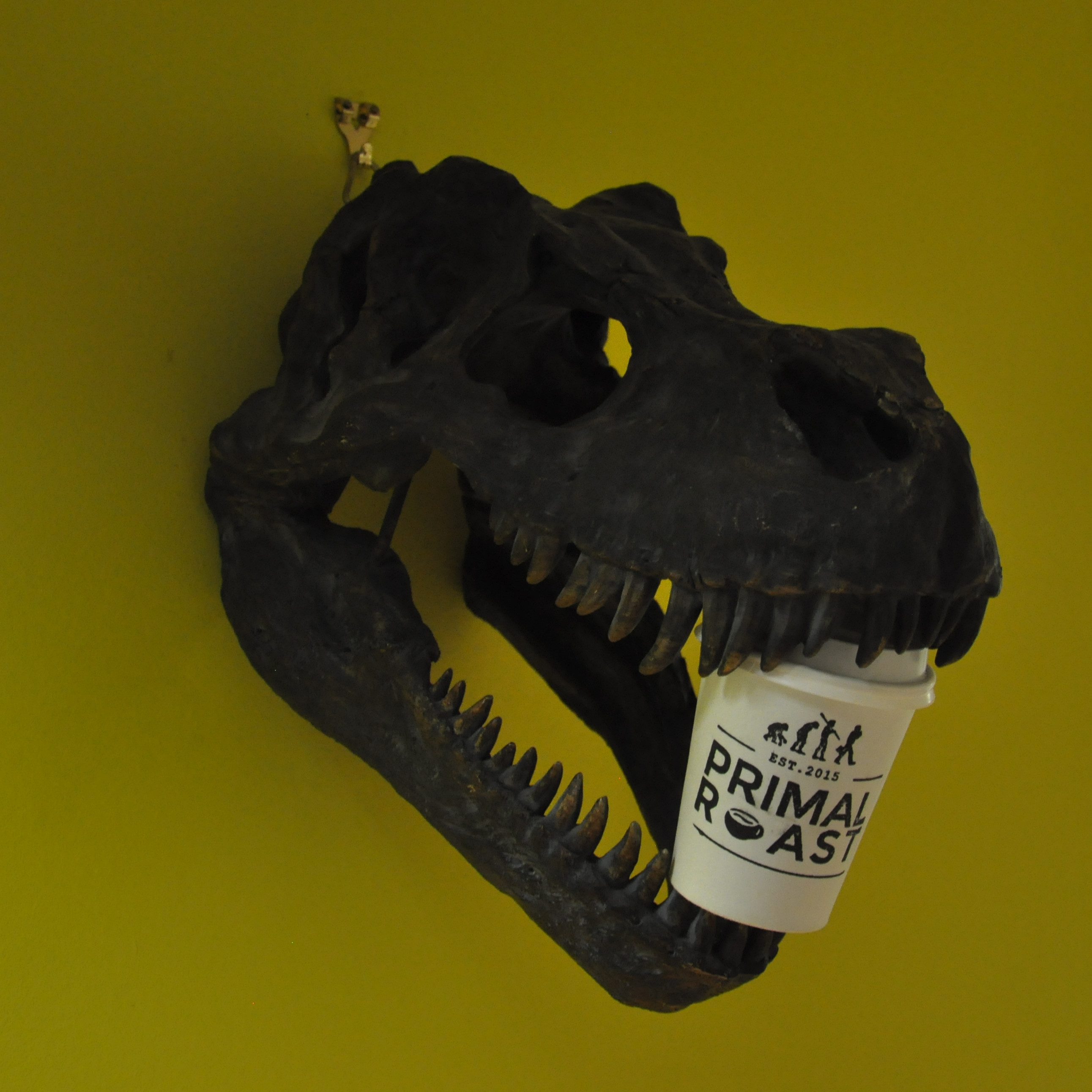 What looks to be a dinosaur's skull from the wall of Primal Roast in Glasgow, holding a Primal Roast takeaway cup between its open jaws.