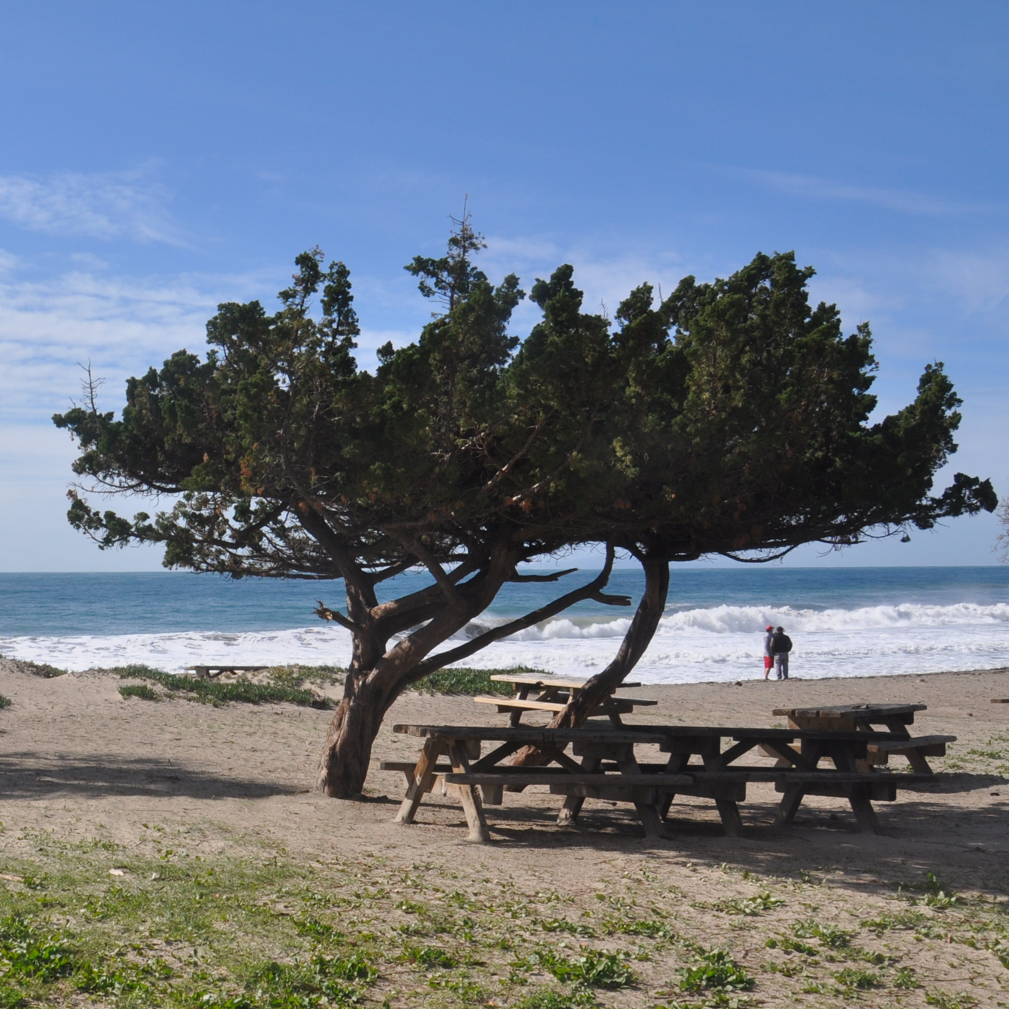 The picnic area at Sycamore Cove Beach on the Pacific Coast Highway just west of Los Angeles.