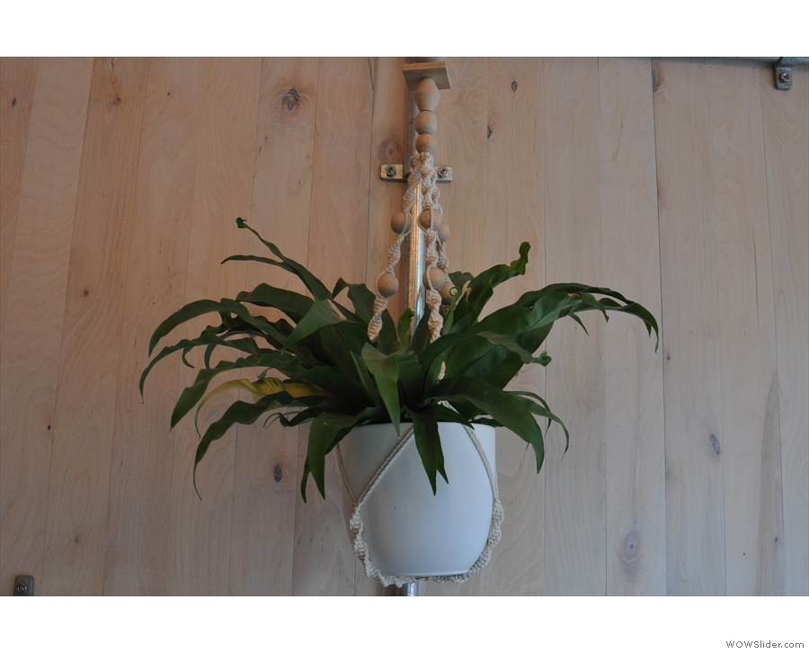 The decor is similarly simple, mostly consisting of hanging plants...