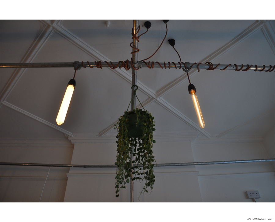 ... and hanging plants along with lights.