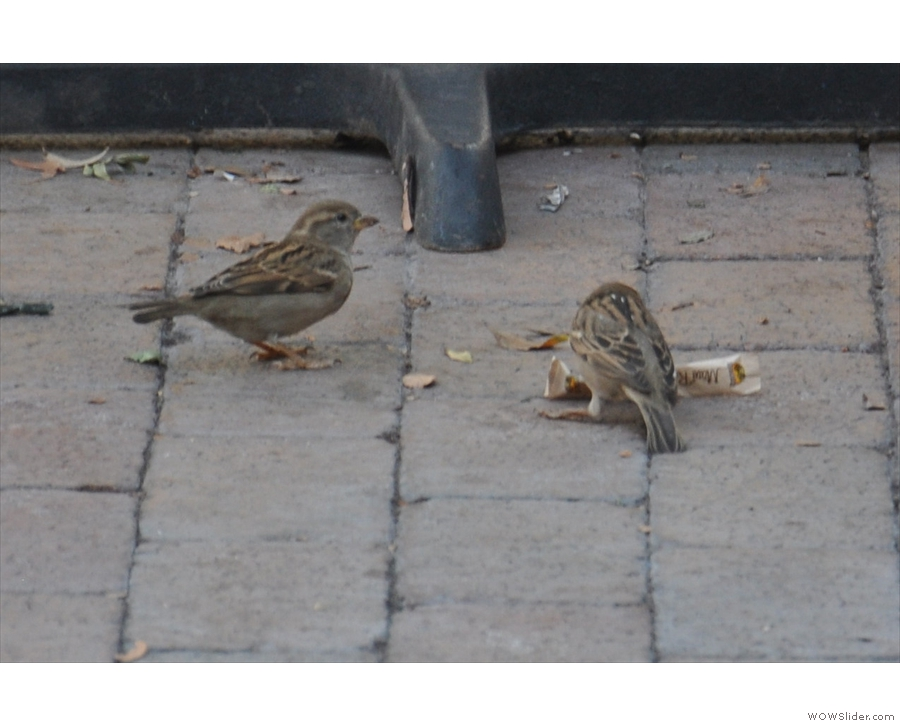 While eating my lunch, these two fellows came and pulled a sachet of sugar from a table.