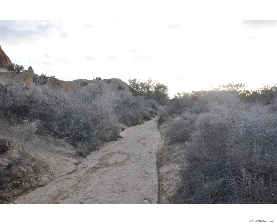 I decided to go for a walk along the Skull Rock Trail. It was well-marked, but quite subtle.