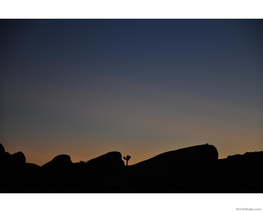 A lonely Joshua Tree on the horizon...