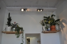 There are more lights at the back, above two shelves stacked with plants.