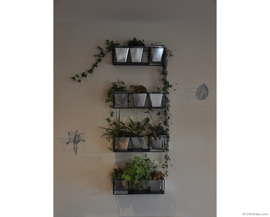 The third is a shelf with various greenery, a nod to the coffee shop's name, Canopy.