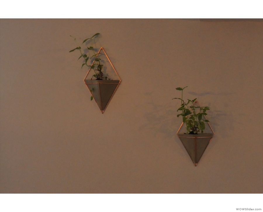 ... as are these plants on the wall.