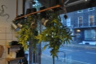 It's not all light bulbs. These plants adorn the window on the right.