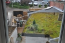 The view out the back. Check out the green roof! The yard belongs to Exe, by the way.