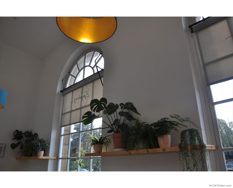 There are plants galore downstairs, which help lighten the place in a different way...