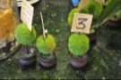The minature trees are not just for show. They also act as table markers.