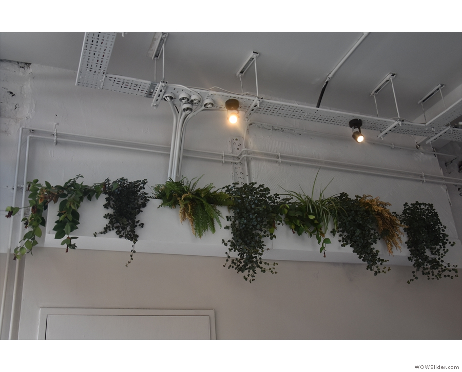 ... these plants hanging on the left-hand wall...