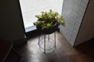 ... as well as this little plant in the window.