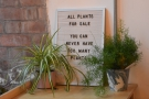 Even the plants are for sale!