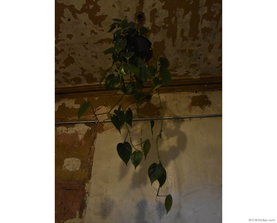 ... and another plant hanging down from the ceiling.