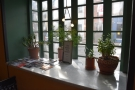 As well as the windows and lights, Rally also has lots of plants.