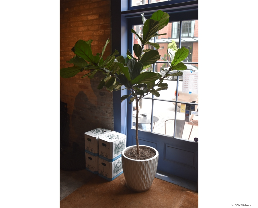 There are lots of nice little touches, including this potted plant just inside the door.
