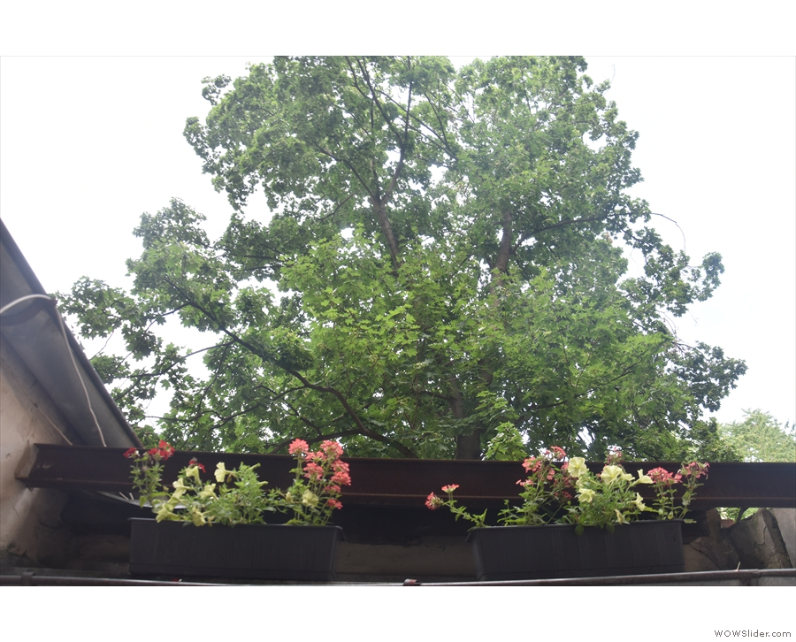 There are more window boxes on top of the wall, plus a large tree towers overhead.