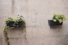 ... including these two window boxes on the wall.