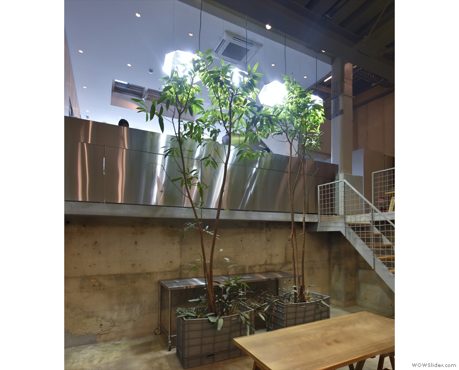 The two trees add a nice green touch to the concrete space. It also shows how bright it is.