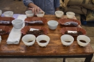 The cupping table, lad out, ready to go, with the ground coffee in the bowls.