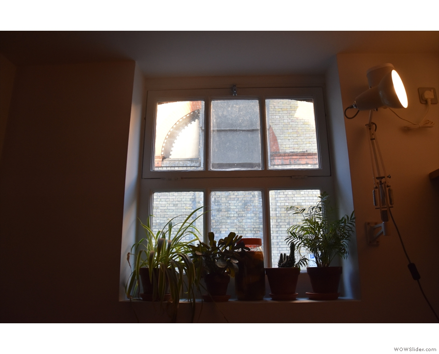 The plants on the windowsills add a welcome touch of green.
