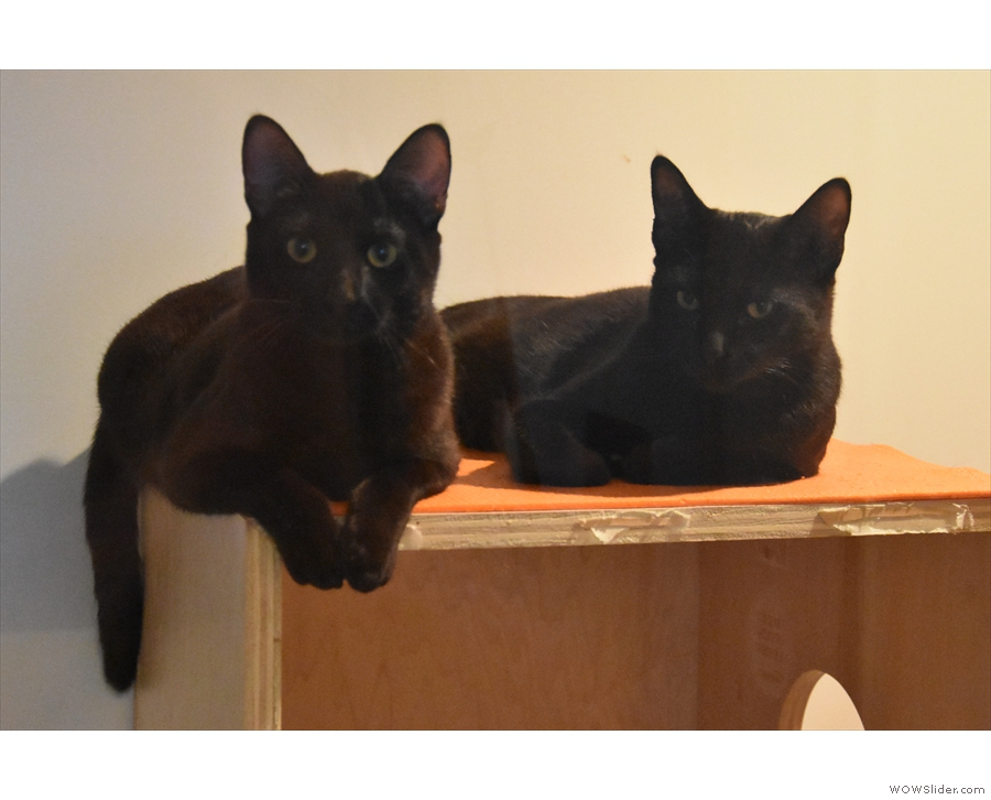 Some of the rooms are home to two or three cats, sometimes bonded pairs.