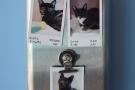 Each room has pictures of the cats outside, along with a brief description.