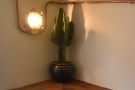 One of the neat touches downstairs is this catcus in the corner.