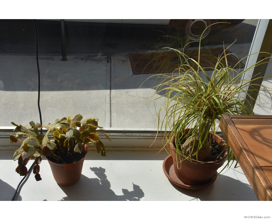 Little Woodfords is also a very green space. For example, these plants are in the window.