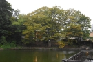 ... from down by the moat. Kanazawaya Coffee Shop Head Office is behind the huge tree!