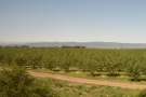 Agriculture is much more prevalent in the Central Valley
