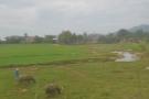 More livestock.