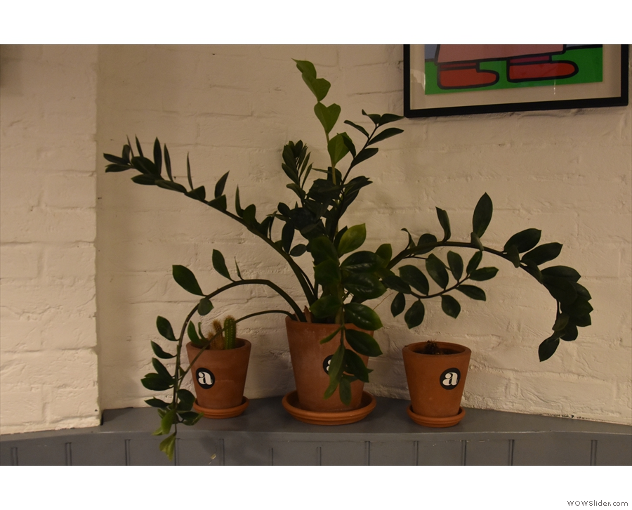 As well as the lights and the artwork on the walls, there are also lots of plants.
