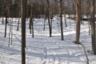... although at times it was just trails through the snow.