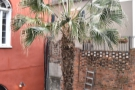 ... and, because I couldn't get a decent picture of it from anywhere else, a palm tree!