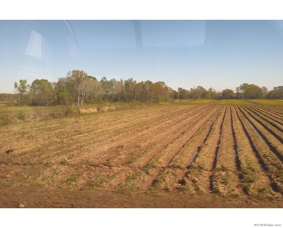 ... and more farmland...